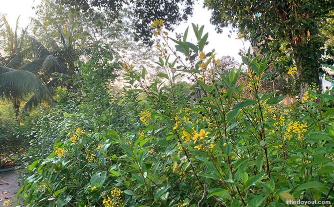 About the Bukit Panjang Butterfly Garden