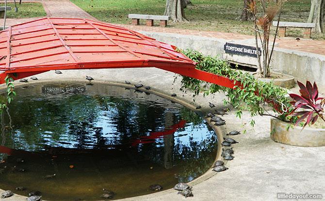 Kusu Island Tortoise Sanctuary