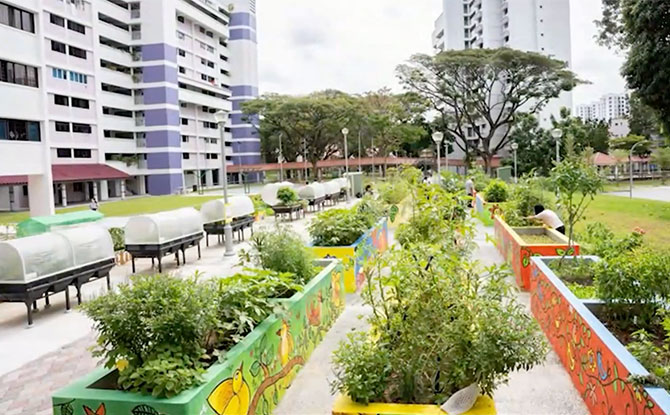 The Social Enterprise Community Urban Farm Grant