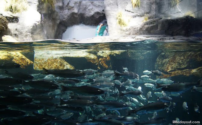 Exhibit at Osaka Aquarium