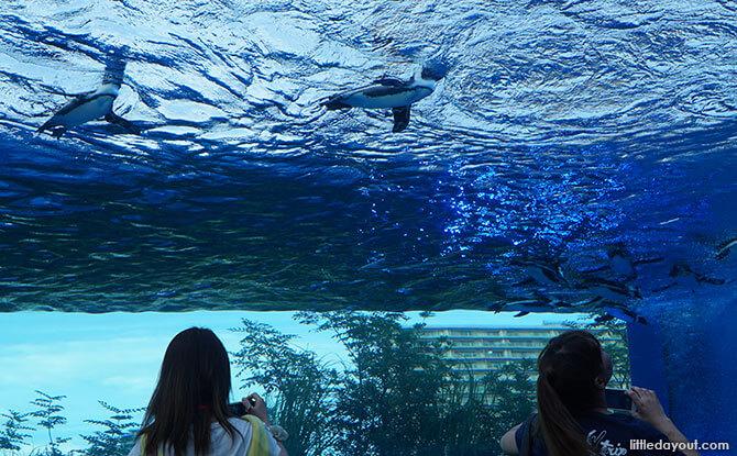 Sunshine Aquarium in Ikebukoro, Tokyo: Underwater Journey, Up In The Sky