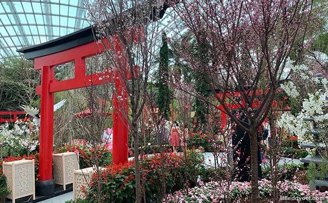 Torri Gates at Sakura Display 2021