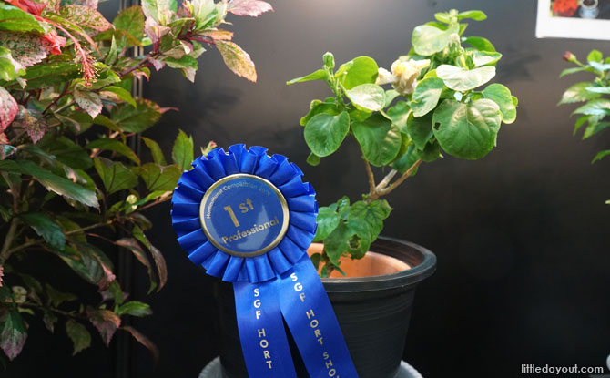 Horticulture Competition display