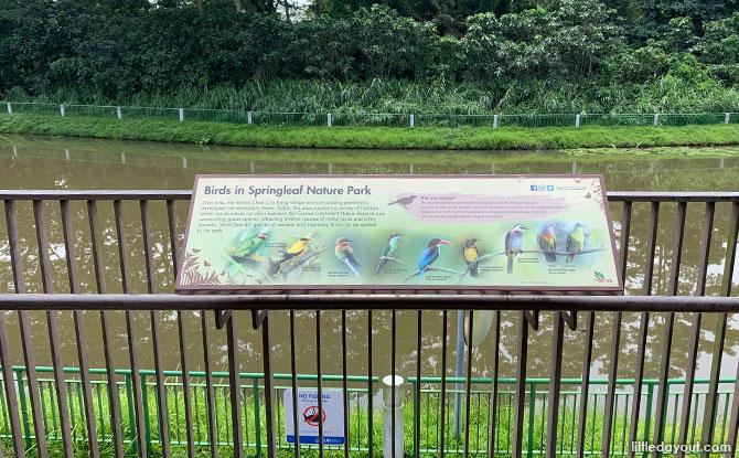 Birds at Springleaf Nature Park