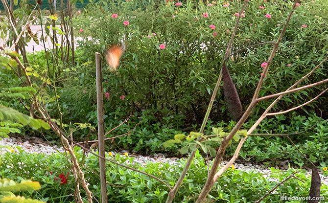 Tampines Changkat Butterfly Garden - What to See and Do