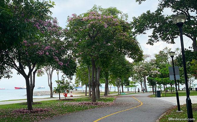 Trumpet trees at East Coast Park