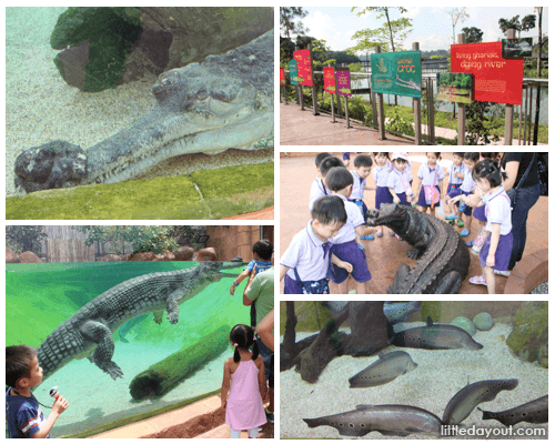 Ganges and Murray River Zones at River Safari Singapore