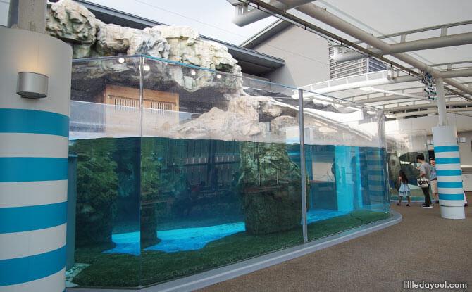 Seal exhibit, Kyoto Aquarium