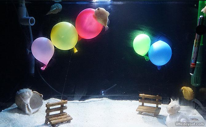 Balloon Fish at Shinagawa Aquarium