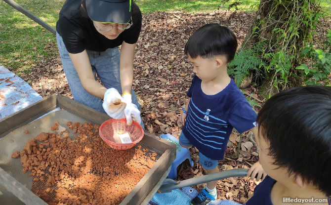 Sorting through the soil at Fort Canning Park