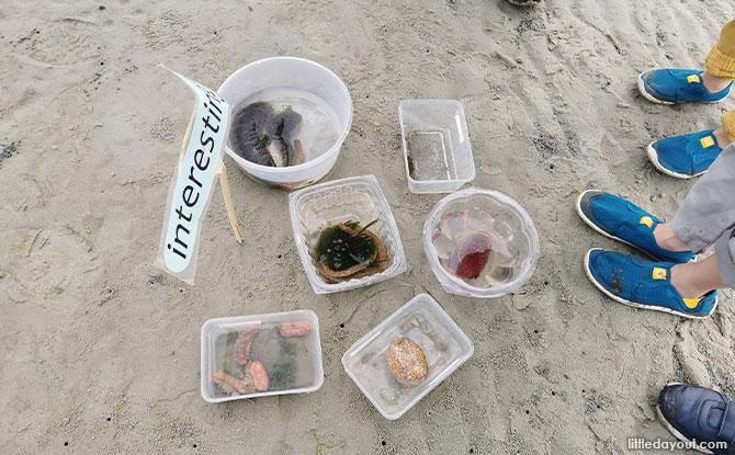 Different Sea Cucumbers