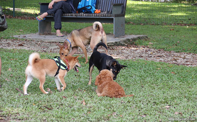 Bishan – Ang Mo Kio Park Dog Run