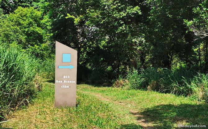 Blue Square trails