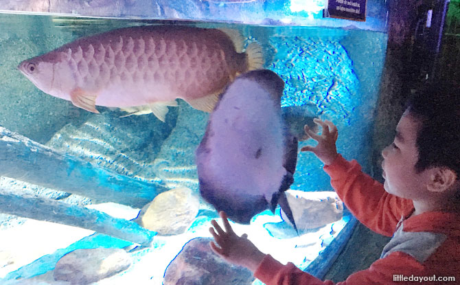 Learn about marine life at Sea Life Bangkok