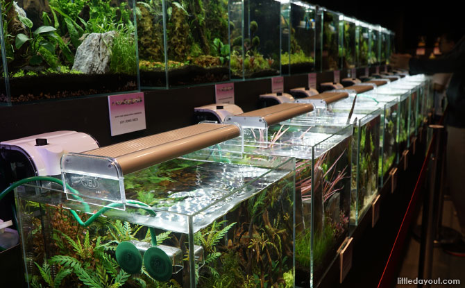 Nano Tank Aquascaping displays