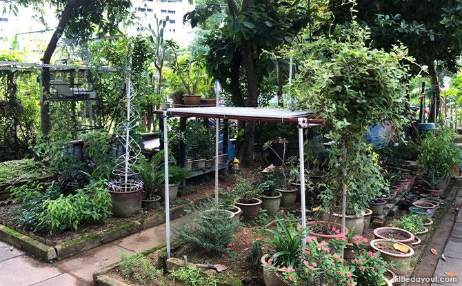 Tampines Green Community Garden