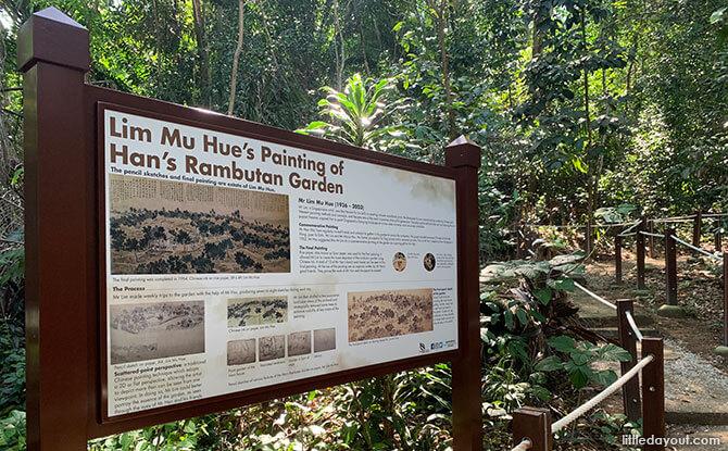Rambutan Plantation