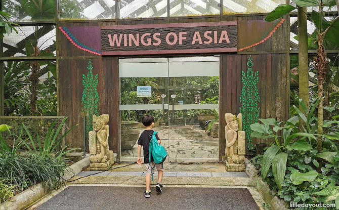 Wings of Asia