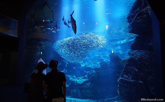 Kyoto Aquarium: Salamanders, Seals and Other Sea Life