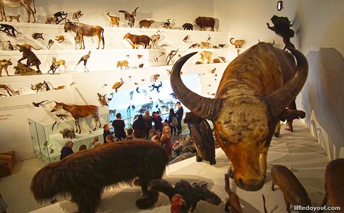 Wild, Melbourne Museum