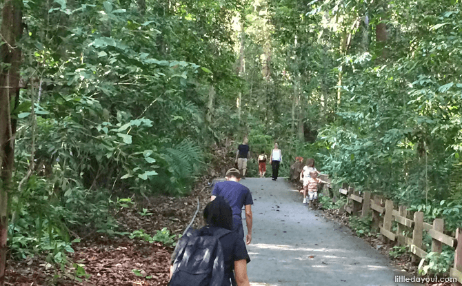 Trekking at Bukit Timah