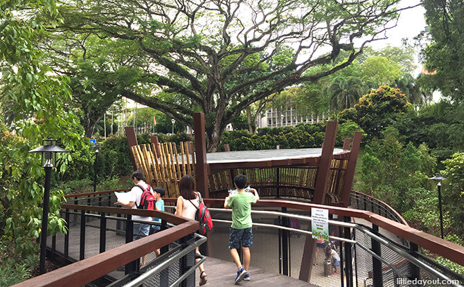 Elevated Walkway to Nature Play Area at Jacob Ballas Children's Garden