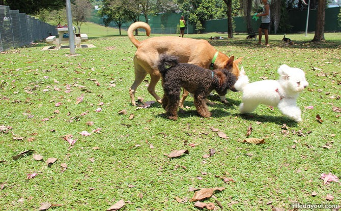 Sembawang Park Dog Run - Dog Runs in Singapore