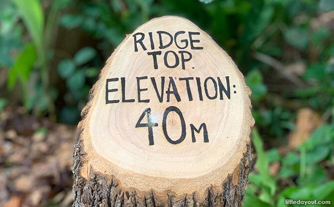 Ridge Top at the Singapore Botanic Gardens Gallop Extension