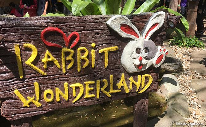 Meet the Rabbits!