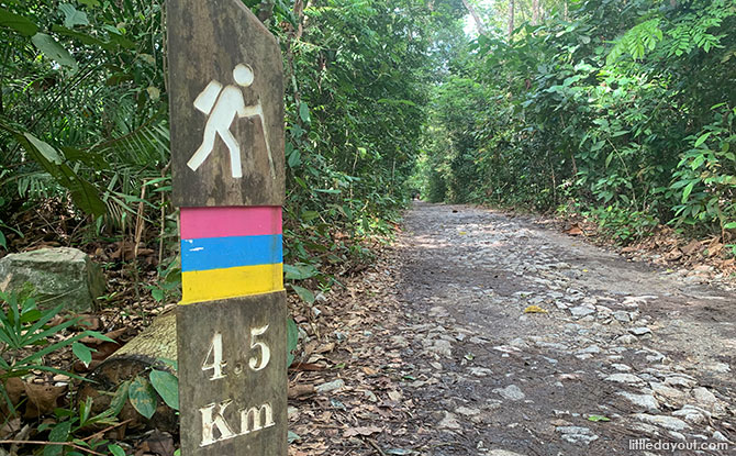 3 Levels Of MacRitchie Trails & Walks: From Easy To Difficult