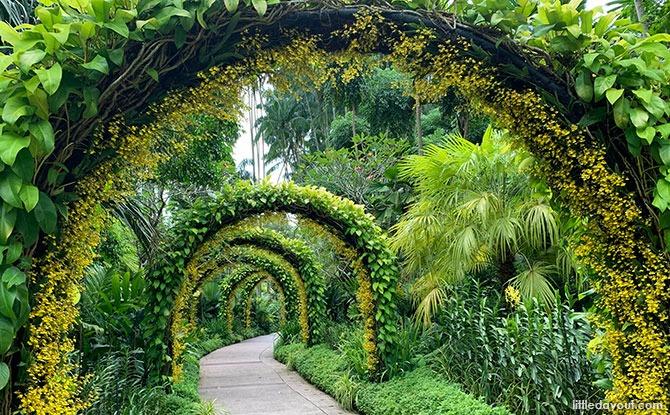 Golden Shower Arches