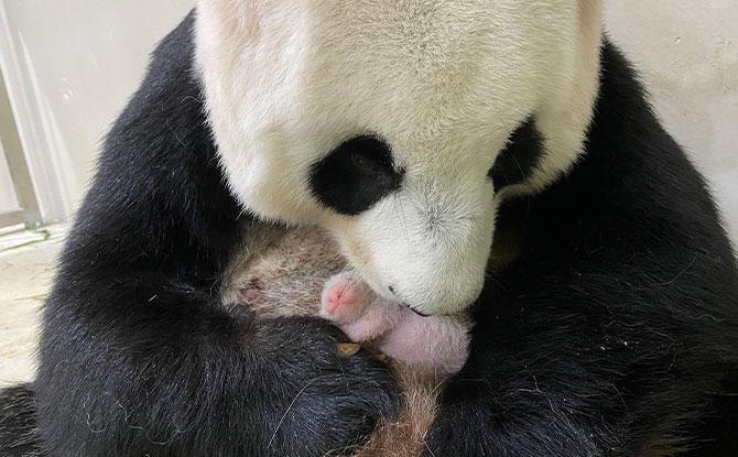 Jia Jia and baby
