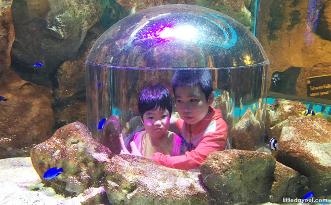 Visiting Sea Life Bangkok Ocean World at Siam Paragon with kids