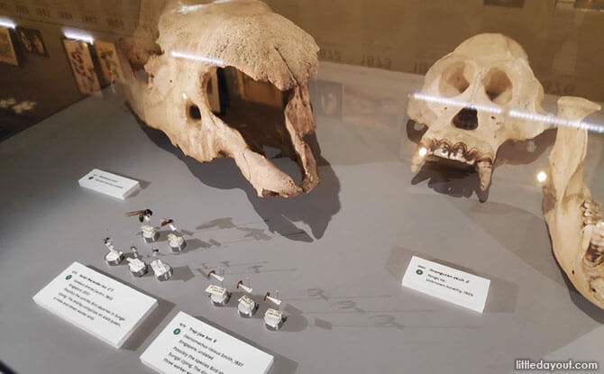 Animal Specimens, Skulls and Insects