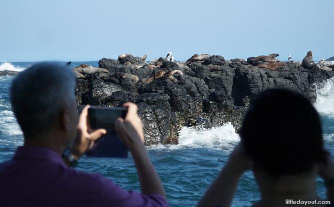 Seals at Phillip Island