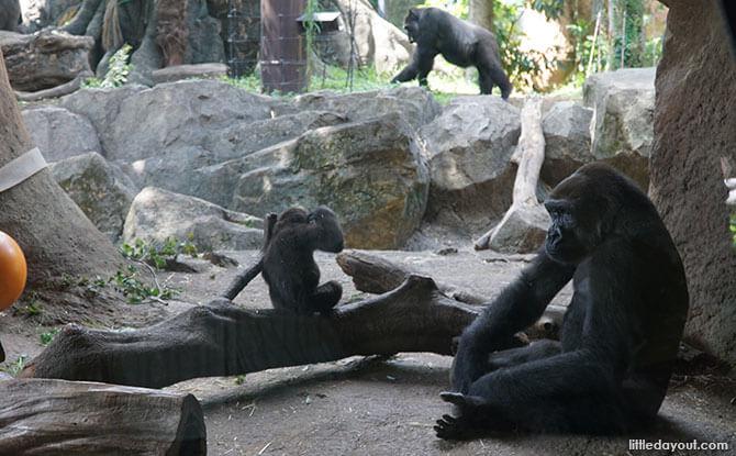 Gorilla Woods