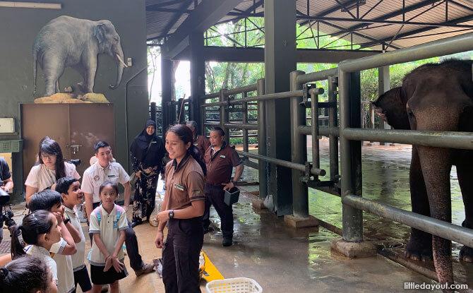 Gentle Giants Wildlife Tour