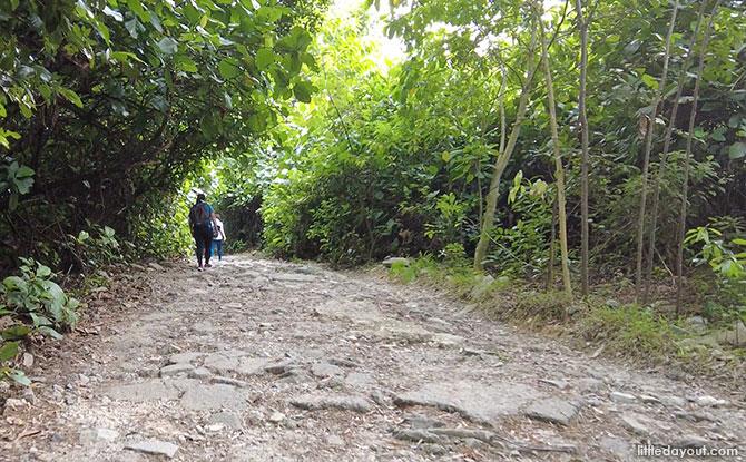 Mandai T15 Trail: Things to Know