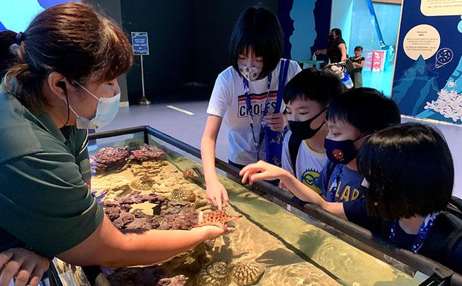 S.E.A. Aquarium - Children experiencing the Discovery Pool