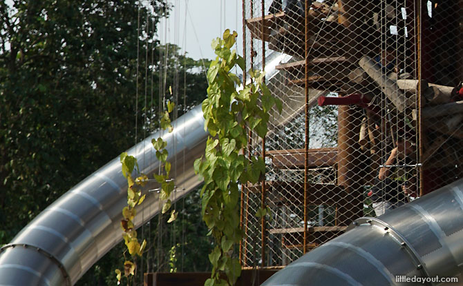 Climber plants at the Jurong Lake Gardens Playground