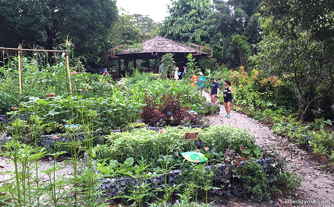 Overview of Farm Zone at Jacob Ballas Children's Garden New Extension