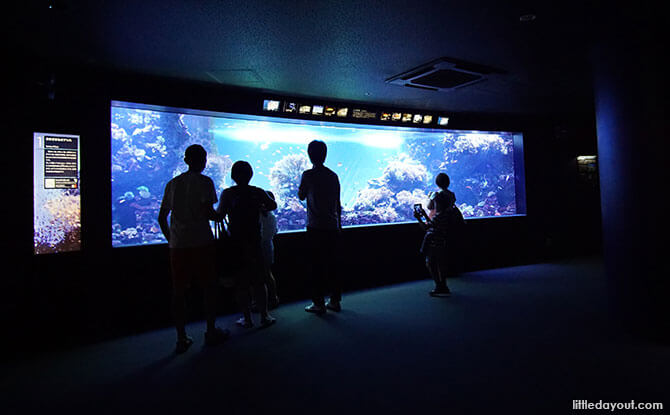 Ocean Journey, Sunshine Aquarium