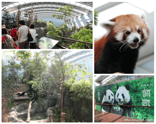 Giant Panda Forest