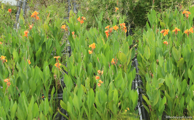 Flowers at the Floating Wetlands