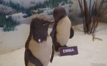 Things To Do At Phillip Island: Beyond The Little Penguins