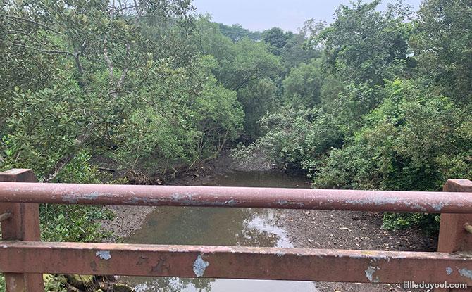 Mangrove Swamp at Admiralty Park