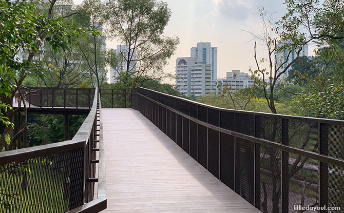 Elevated Boardwalk