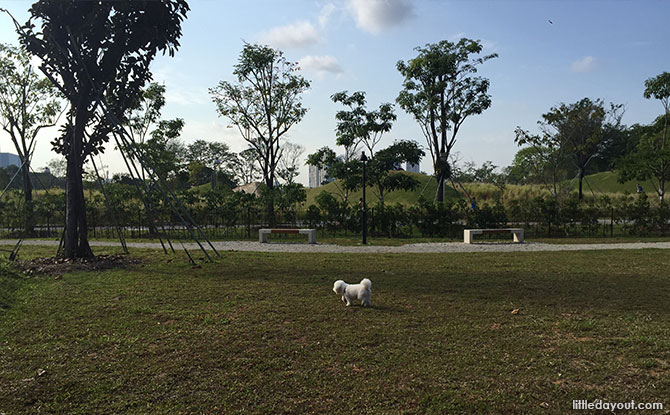 Jurong Lake Park Dog Run - Dog Runs in Singapore