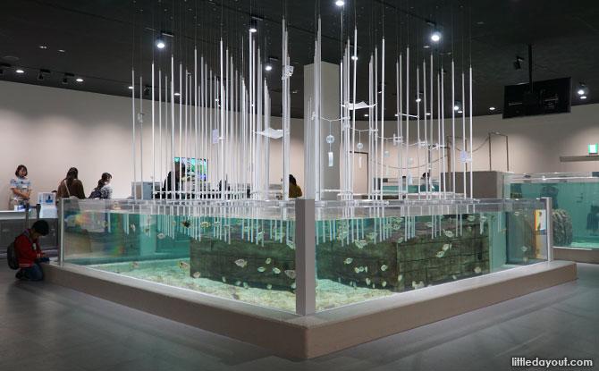 Archer fish display at NIFREL, Osaka, Japan