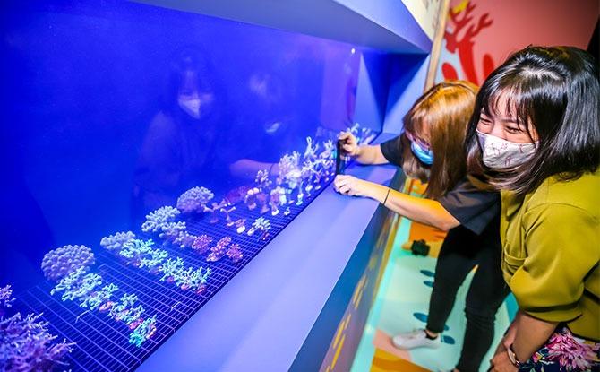 S.E.A. Aquarium - Guests viewing coral fragments at Coral Reef habitat